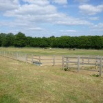 Individually Fenced Turnout Paddocks